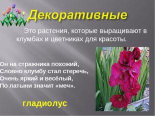 Это растения, которые выращивают в клумбах и цветниках для красоты. Он на ст