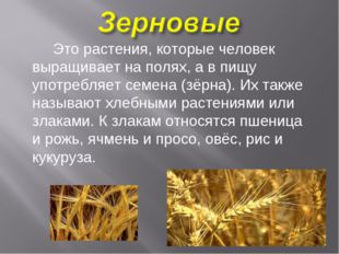 Это растения, которые человек выращивает на полях, а в пищу употребляет семе
