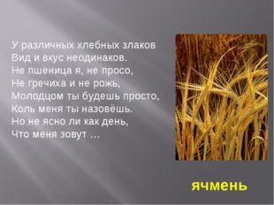 У различных хлебных злаков Вид и вкус неодинаков. Не пшеница я, не просо, Не