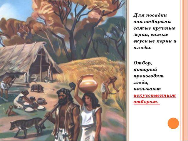 Для посадки они отбирали самые крупные зерна, самые вкусные корни и плоды. От...