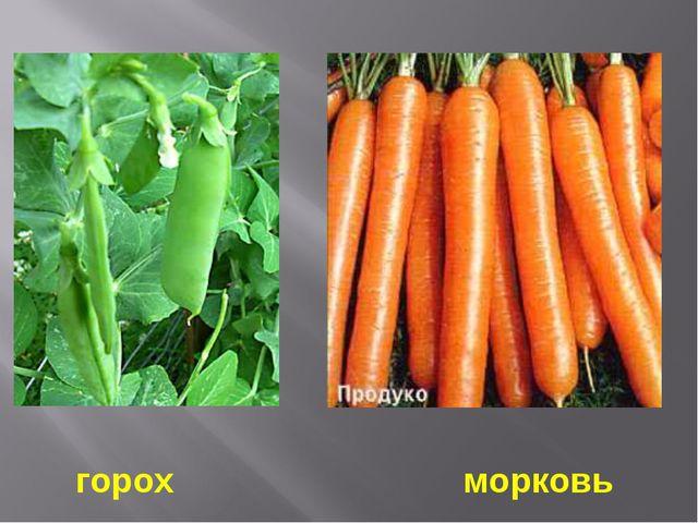 горох морковь