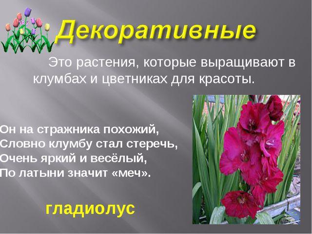 Это растения, которые выращивают в клумбах и цветниках для красоты. Он на ст...