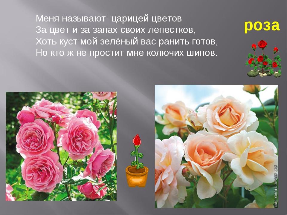 построить я люблю розы краткое смс протечки