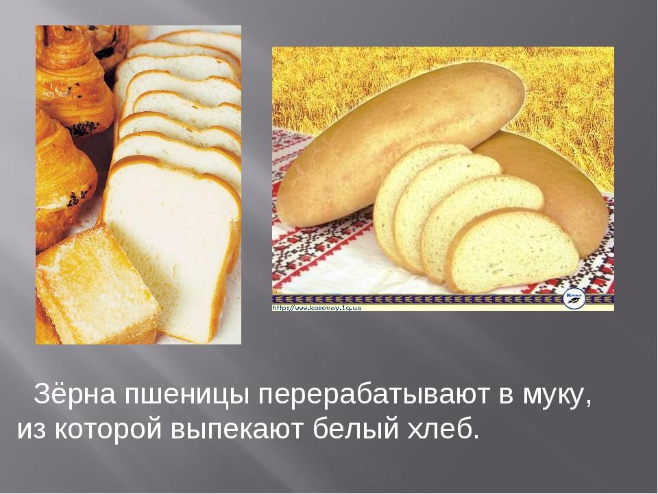 Зёрна пшеницы перерабатывают в муку, из которой выпекают белый хлеб.