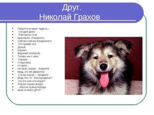 Друг. Николай Грахов Творятся в мире Чудеса – Сегодня днем Я встретил пса! К