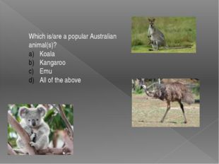 Which is/are a popular Australian animal(s)? Koala Kangaroo Emu All of the ab