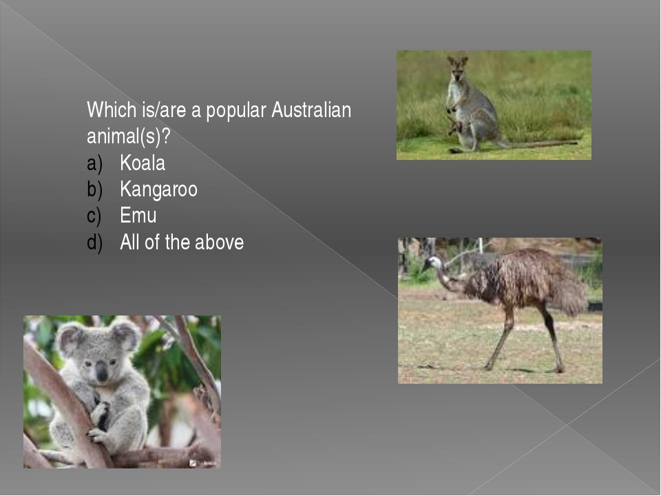 Which is/are a popular Australian animal(s)? Koala Kangaroo Emu All of the ab...