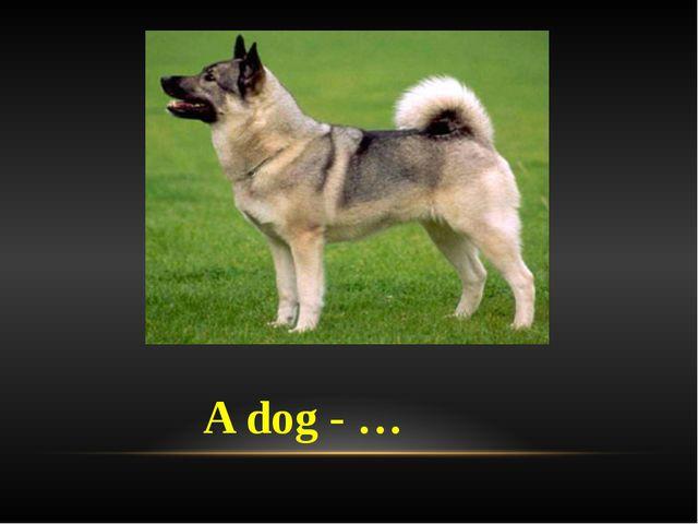 A dog - …