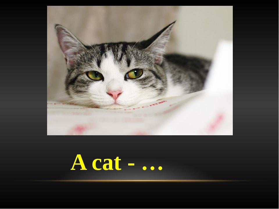A cat - …