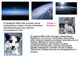 25 марта 1961 года в космос стартовала ракета со Звёздочкой на борту. Выполн