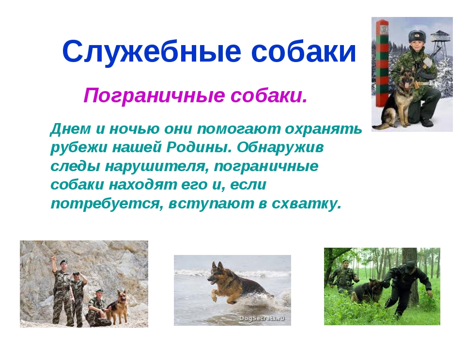 Служебные собаки Пограничные собаки. Днем и ночью они помогают охранять рубеж...
