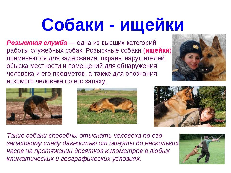 Собаки - ищейки Розыскная служба— одна из высших категорий работы служебных...
