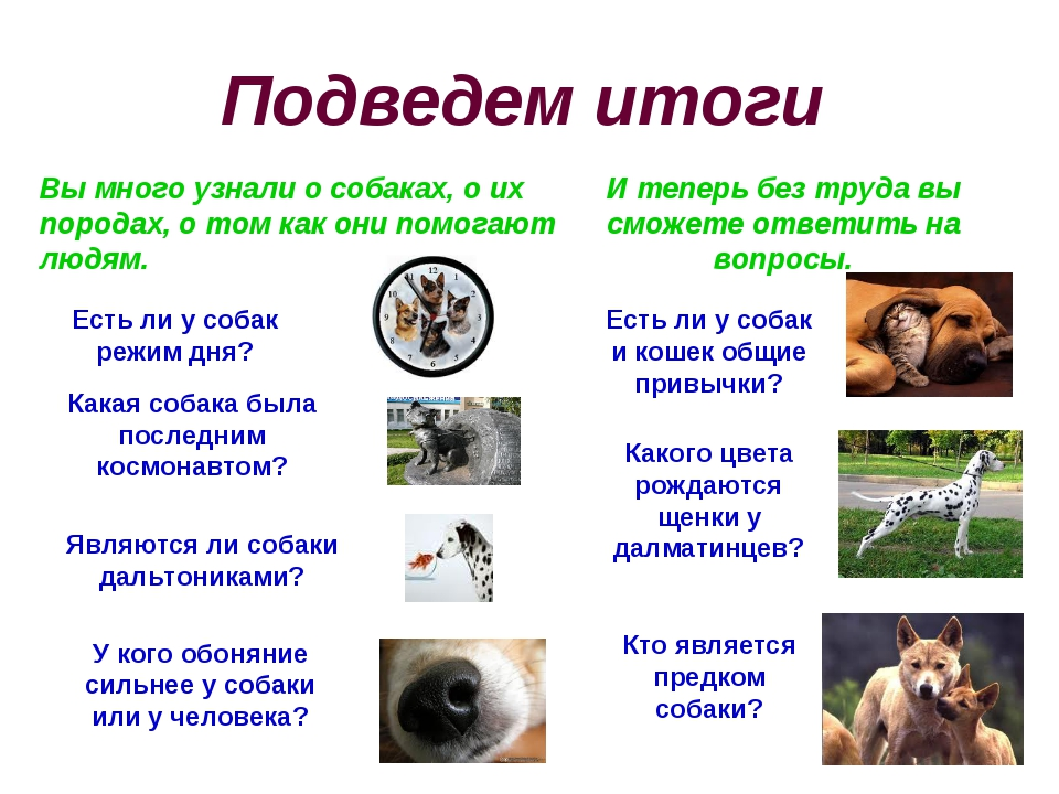 Подведем итоги Вы много узнали о собаках, о их породах, о том как они помогаю...