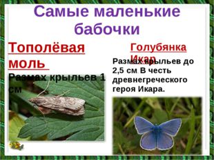 Самые маленькие бабочки Тополёвая моль Размах крыльев 1 см. Голубянка Икар Ра
