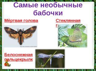Самые необычные бабочки Мёртвая голова Стеклянная гетера Белоснежная пальцекр