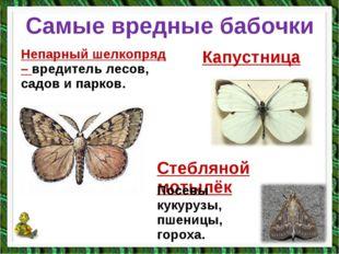 Самые вредные бабочки Непарный шелкопряд – вредитель лесов, садов и парков. К