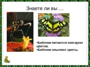 Знаете ли вы … Бабочки питаются нектаром цветов. Бабочки опыляют цветы.