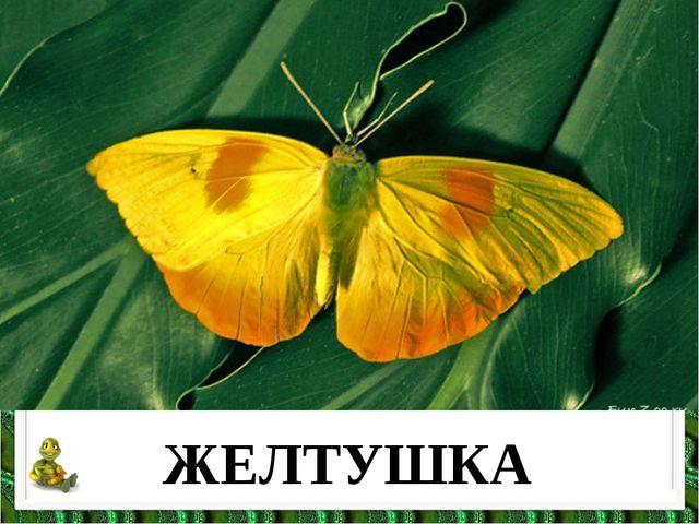 ЖЕЛТУШКА