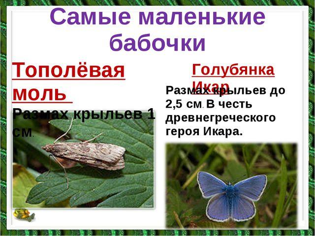 Самые маленькие бабочки Тополёвая моль Размах крыльев 1 см. Голубянка Икар Ра...
