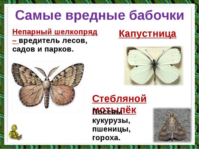 Самые вредные бабочки Непарный шелкопряд – вредитель лесов, садов и парков. К...