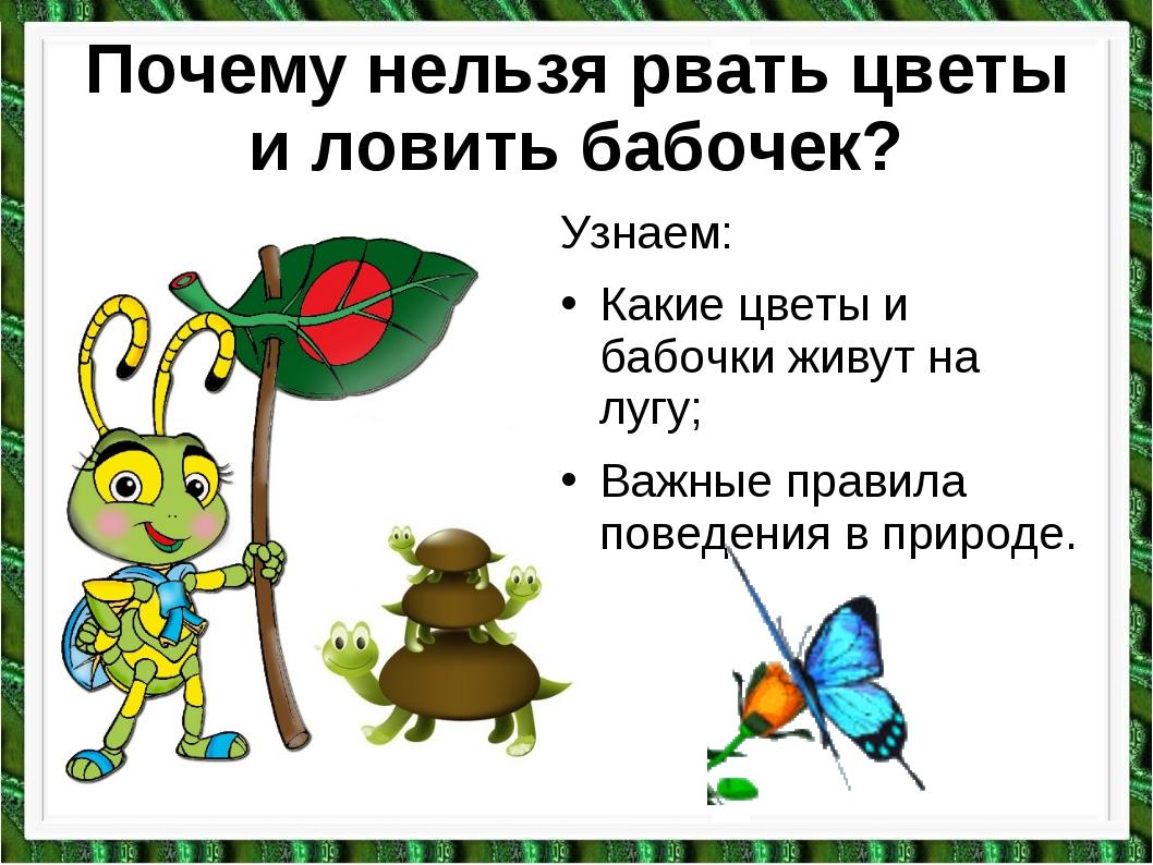Почему нельзя рвать цветы и ловить бабочек? Узнаем: Какие цветы и бабочки жив...