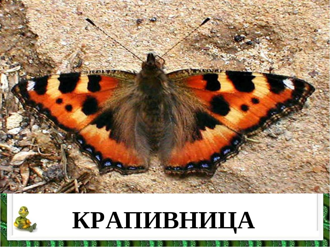 КРАПИВНИЦА