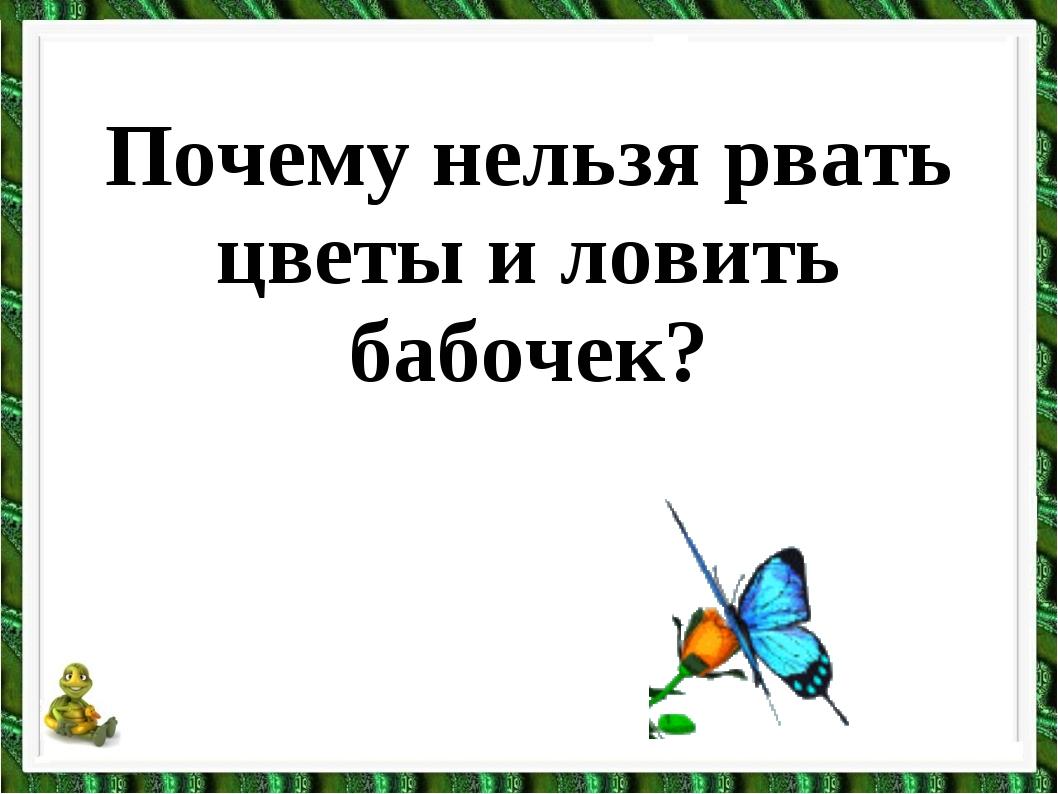 Почему нельзя рвать цветы и ловить бабочек?