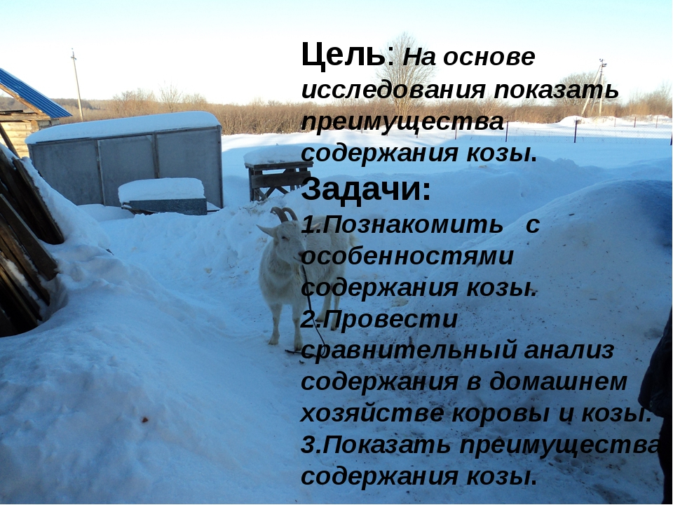 Цель: На основе исследования показать преимущества содержания козы. Задачи: 1...