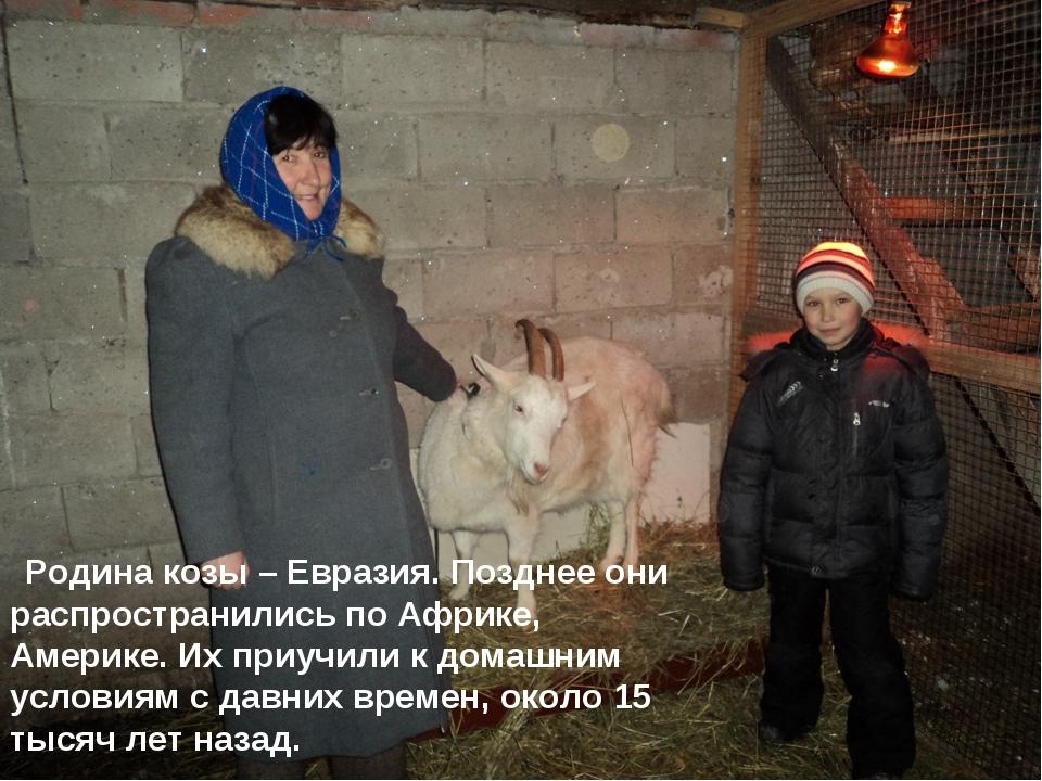 Родина козы – Евразия. Позднее они распространились по Африке, Америке. Их п...