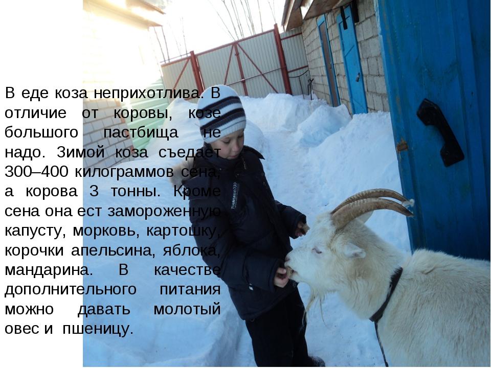 В еде коза неприхотлива. В отличие от коровы, козе большого пастбища не надо....