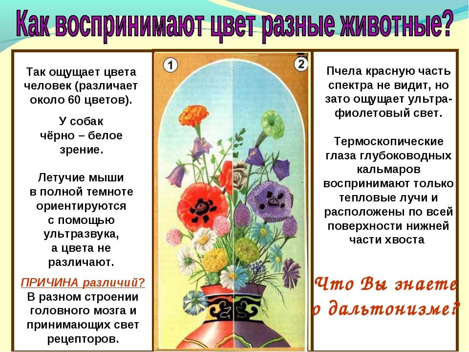Что Вы знаете о дальтонизме? Так ощущает цвета человек (различает около 60 ц...