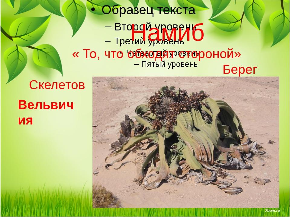 Намиб « То, что обходят стороной» Берег Скелетов Вельвичия Вельвичия