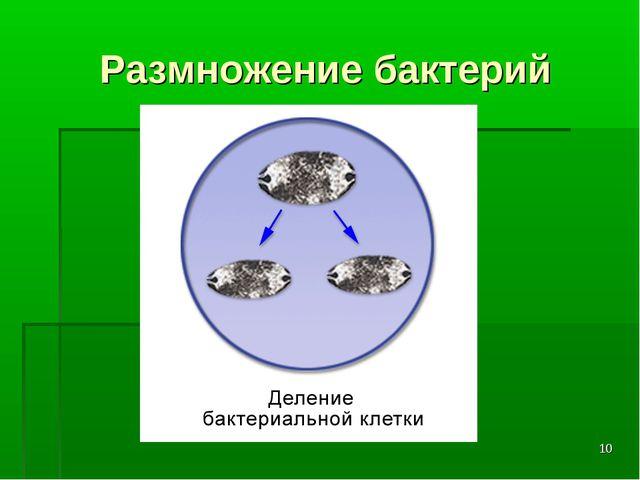 * Размножение бактерий
