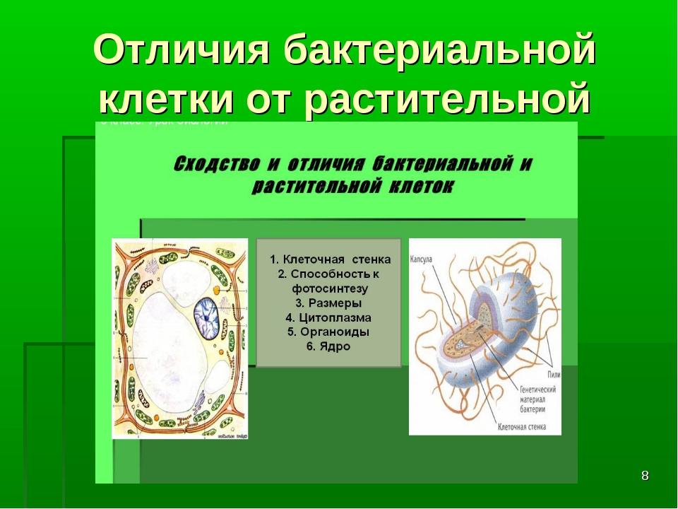 * Отличия бактериальной клетки от растительной