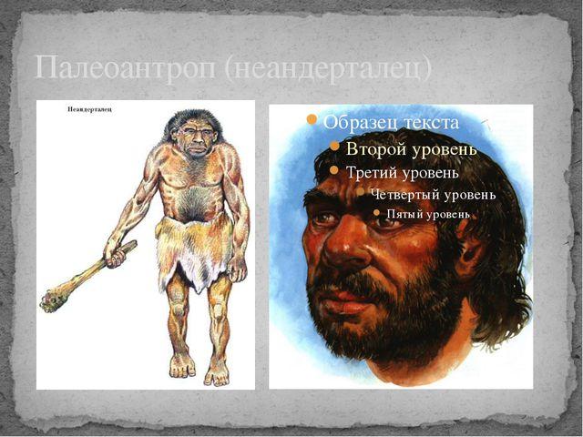 Палеоантроп (неандерталец)