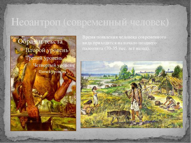 Неоантроп (современный человек) Время появления человека современного вида пр...