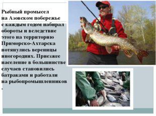 Рыбный промысел наАзовском побережье скаждым годом набирал обороты ивследс