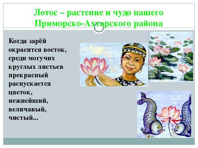 Лотос – растение и чудо нашего Приморско-Ахтарского района Когда зарёй окраси...