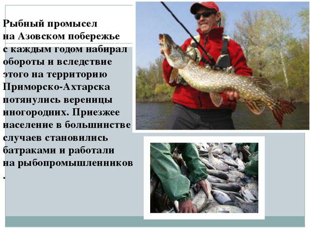 Рыбный промысел наАзовском побережье скаждым годом набирал обороты ивследс...