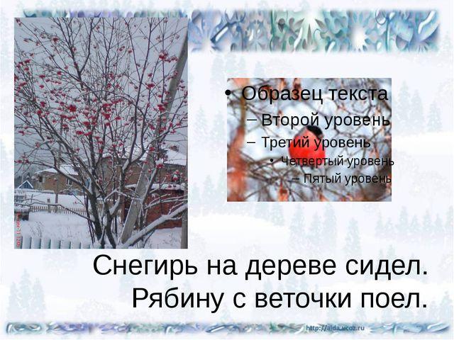 Снегирь на дереве сидел. Рябину с веточки поел.