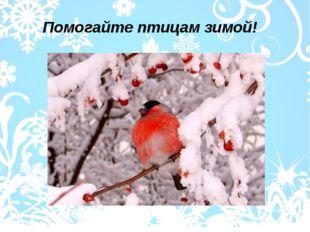 Помогайте птицам зимой!