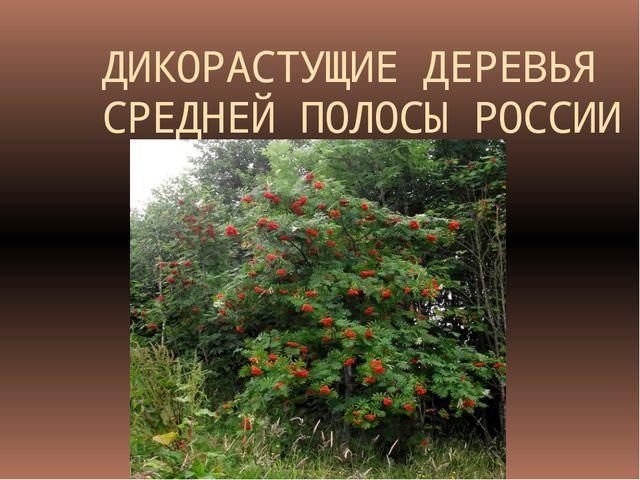 ДИКОРАСТУЩИЕ ДЕРЕВЬЯ СРЕДНЕЙ ПОЛОСЫ РОССИИ