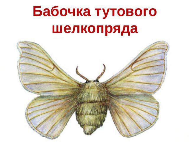 Бабочка тутового шелкопряда
