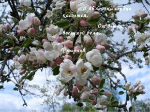 И яблонька сердца касается, От вьюги весенней бела… В. Смирнов