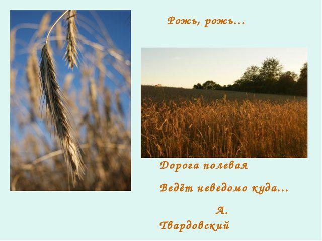 Рожь, рожь… Дорога полевая Ведёт неведомо куда… А. Твардовский