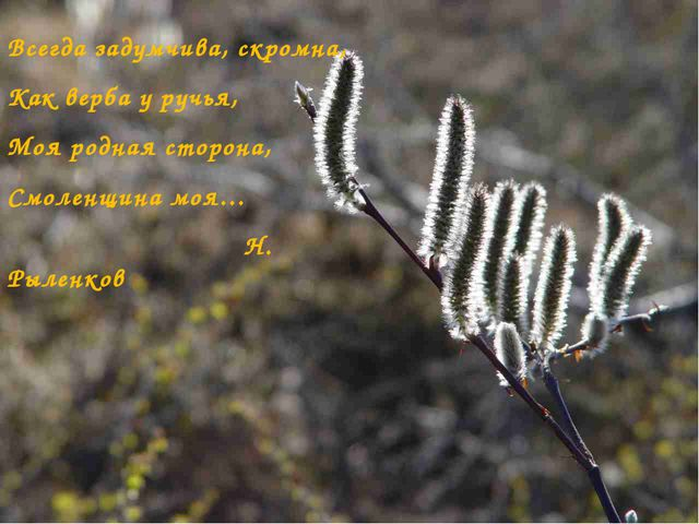 Всегда задумчива, скромна, Как верба у ручья, Моя родная сторона, Смоленщина...