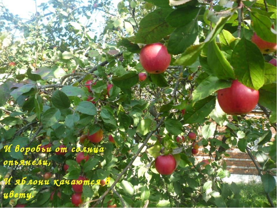 И воробьи от солнца опьянели, И яблони качаются в цвету. М.Исаковский