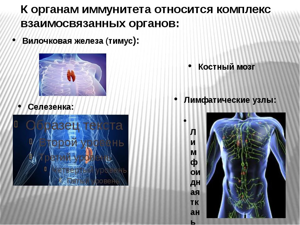 К органам иммунитета относится комплекс взаимосвязанных органов: Вилочковая ж...