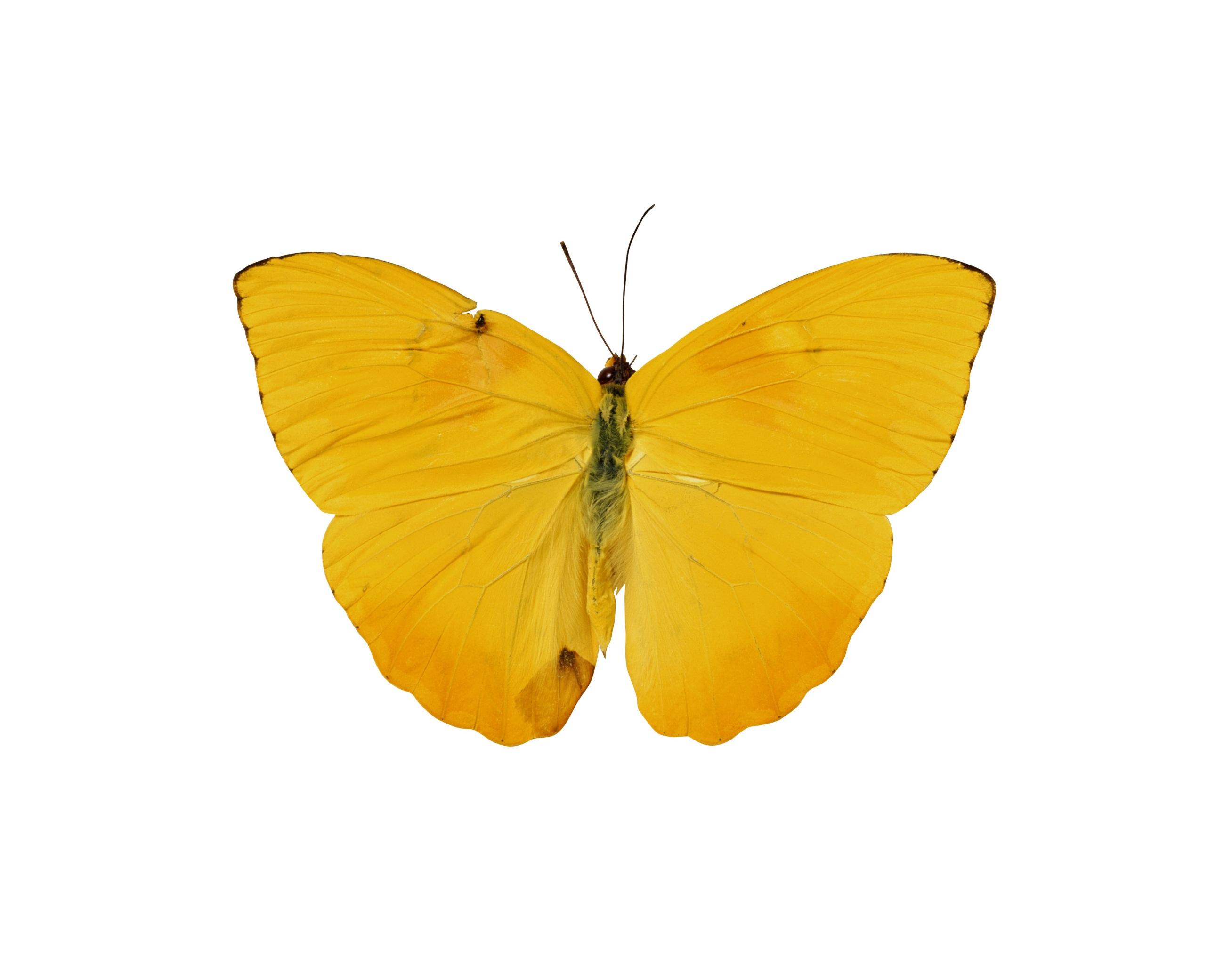 Фоновое изображение бабочки