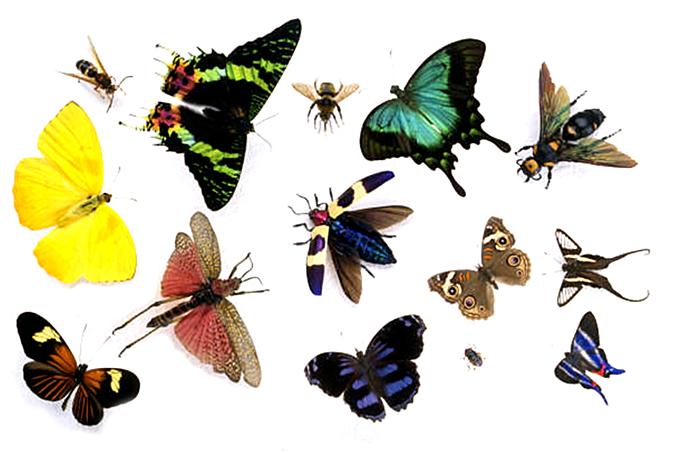 Изображение бабочек